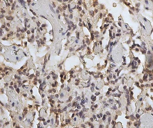 Anti Sheep CD45 Antibody, clone 1.11.32 thumbnail image 7