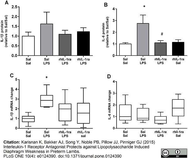 Anti Sheep Interleukin-6 Antibody, clone 4B6 thumbnail image 2