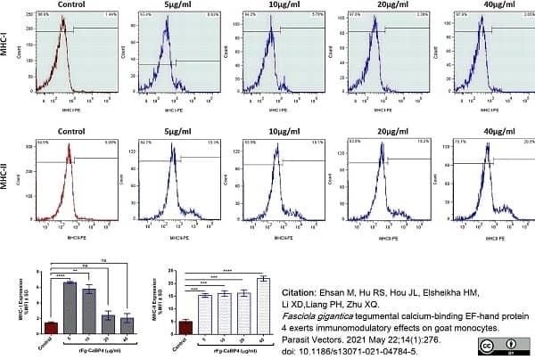 Anti Sheep MHC Class II DR Monomorphic Antibody, clone 37.68 gallery image 1