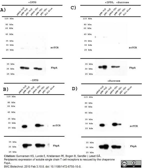 Anti Histidine Tag Antibody, clone AD1.1.10 thumbnail image 7