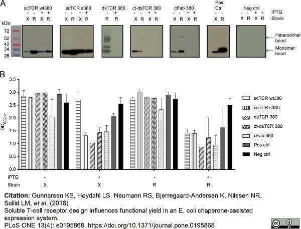 Anti Histidine Tag Antibody, clone AD1.1.10 thumbnail image 9