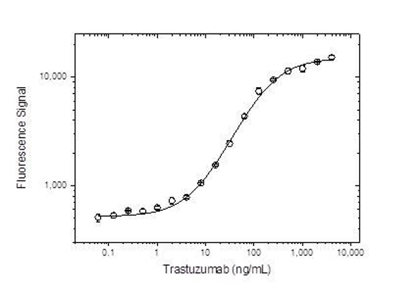 Anti Trastuzumab Antibody, clone AbD16712 thumbnail image 1