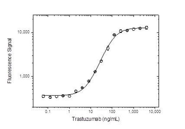 Anti Trastuzumab Antibody, clone AbD16712 thumbnail image 2