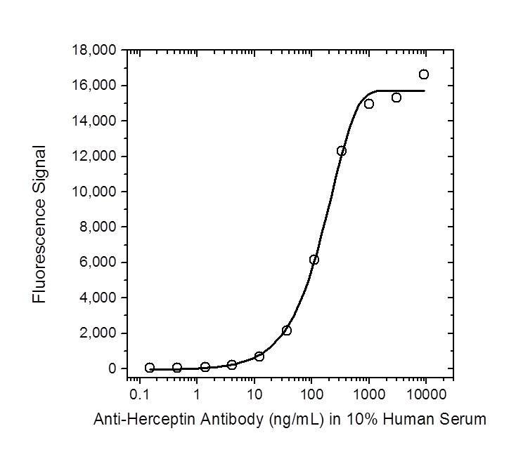 Anti Trastuzumab Antibody, clone AbD16712_hIgG1 thumbnail image 1