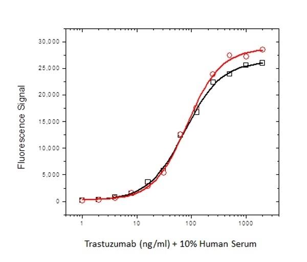 Anti Trastuzumab Antibody, clone AbD18018_hIgG1 thumbnail image 2