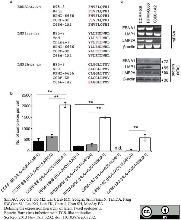 Anti Epstein-Barr Virus Nuclear Antigen Antibody, clone E1-2.5 gallery image 1