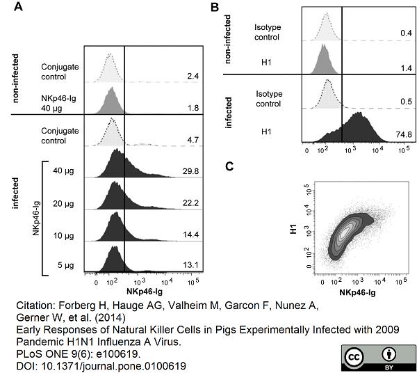 Anti Influenza A H1N1 Hemagglutinin Antibody, clone C102 (IV.C102) thumbnail image 2