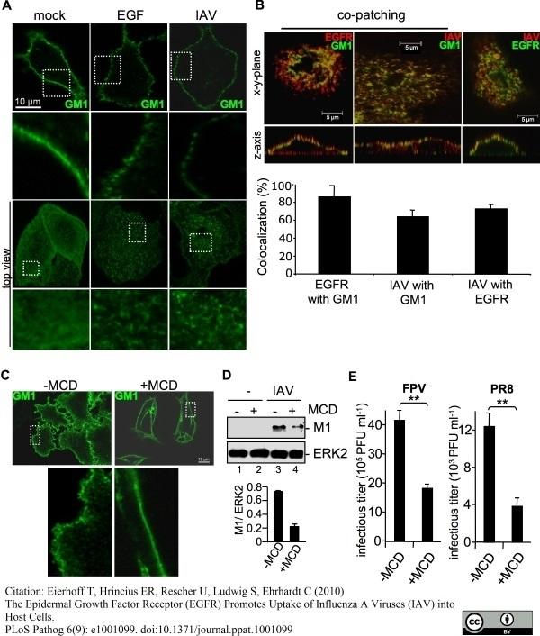 Anti Influenza A Matrix Protein Antibody, clone GA2B thumbnail image 5