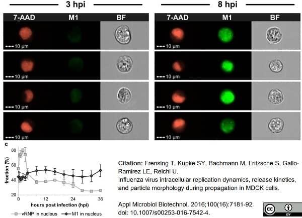 Anti Influenza A Matrix Protein Antibody, clone GA2B thumbnail image 9