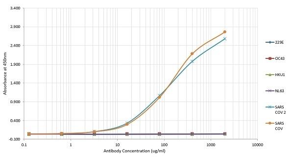 Anti SARS-CoV Nucleoprotein Antibody, clone 3861 thumbnail image 3