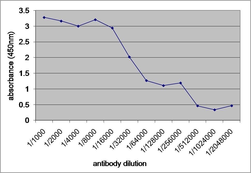 Anti V5-Tag Antibody, clone SV5-Pk1 thumbnail image 1