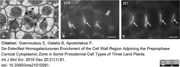 Anti Tubulin Alpha Antibody, clone YOL1/34 thumbnail image 28