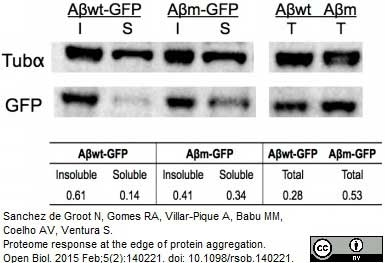 Anti Tubulin Alpha Antibody, clone YOL1/34 thumbnail image 9