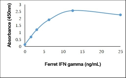 Anti Ferret IFN Gamma Antibody gallery image 1