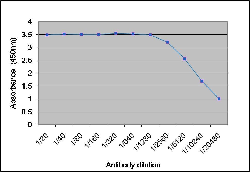 Anti Mushroom Tyrosinase Antibody gallery image 1