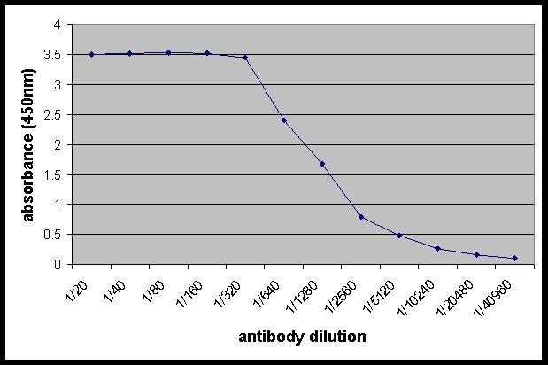 Anti Human Cathepsin B Antibody gallery image 1