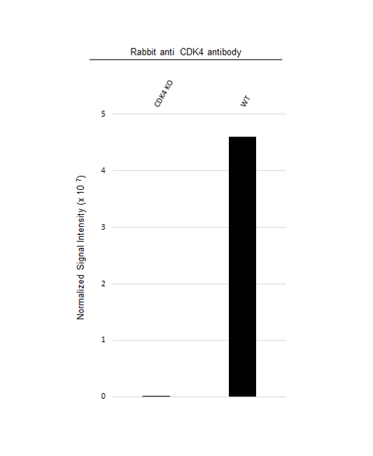 Anti CDK4 Antibody (PrecisionAb Polyclonal Antibody) thumbnail image 3