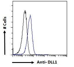 Anti Delta-Like Protein 1 Antibody gallery image 5