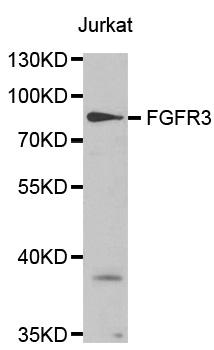 Anti FGFR3 Antibody gallery image 1