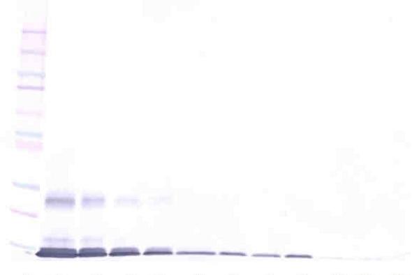 Anti Human GITRL Antibody gallery image 1