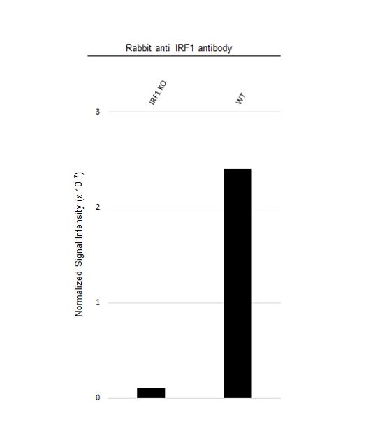 Anti IRF1 Antibody (PrecisionAb Polyclonal Antibody) thumbnail image 3