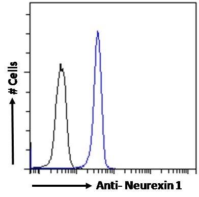 Anti Human Neurexin 1 (C-Terminal) Antibody thumbnail image 2