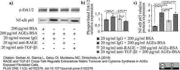 Anti NFkB p65 Antibody (PrecisionAb Polyclonal Antibody) thumbnail image 2