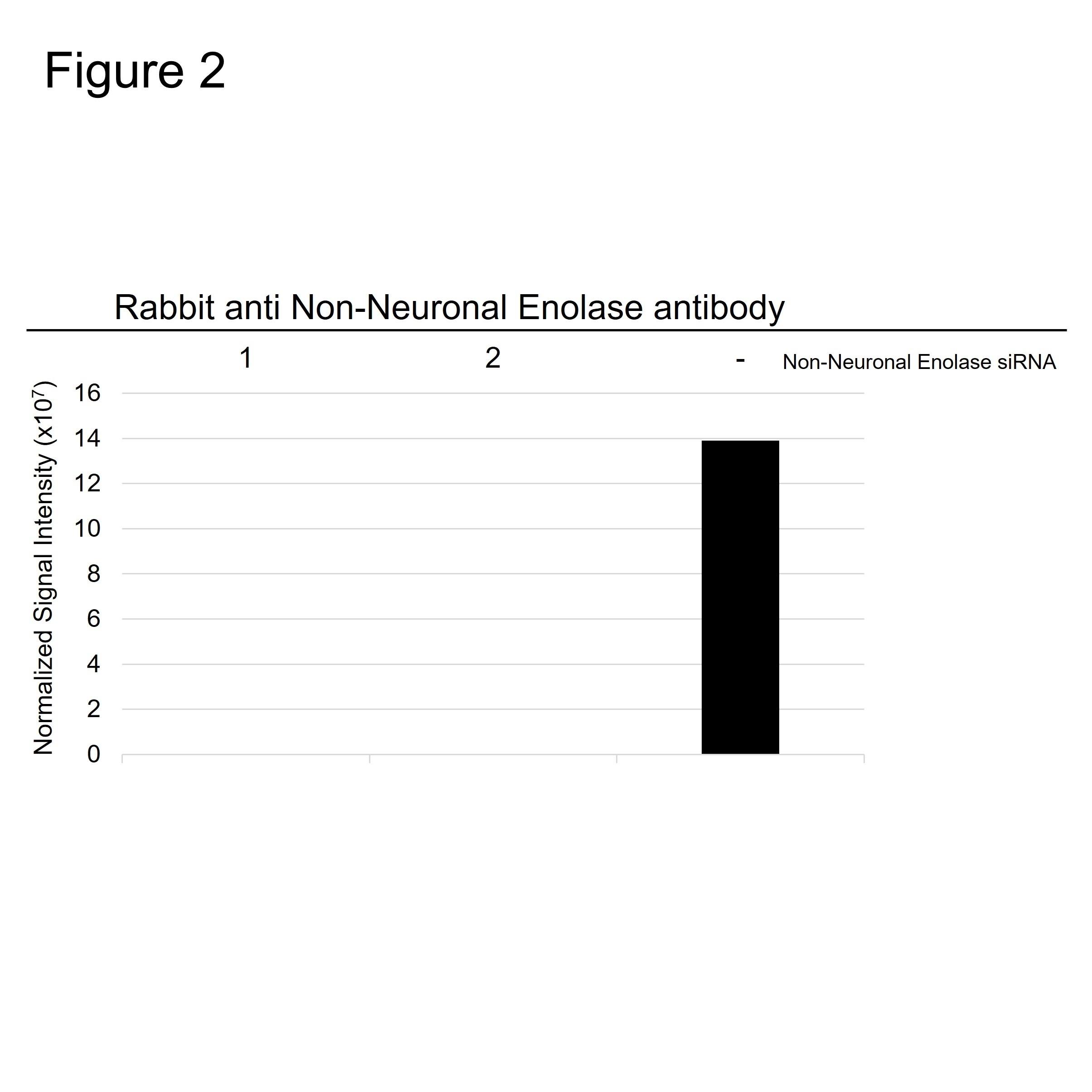Anti Human Non-Neuronal Enolase Antibody thumbnail image 3