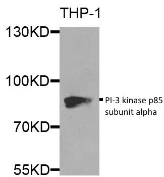 Anti PI-3 Kinase p85 Subunit Alpha Antibody gallery image 1