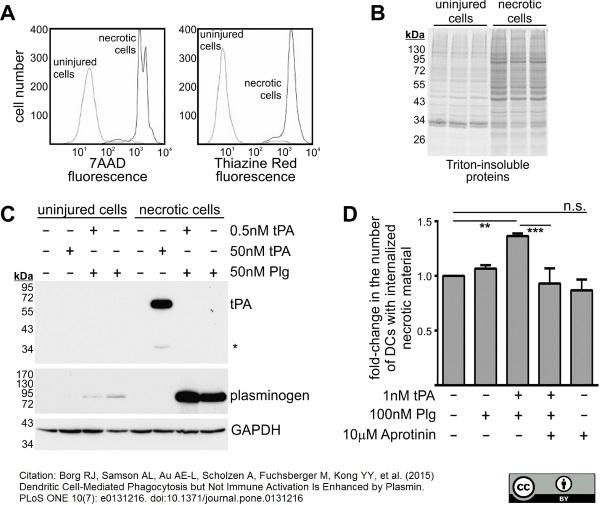 Anti Human Plasminogen Antibody thumbnail image 3