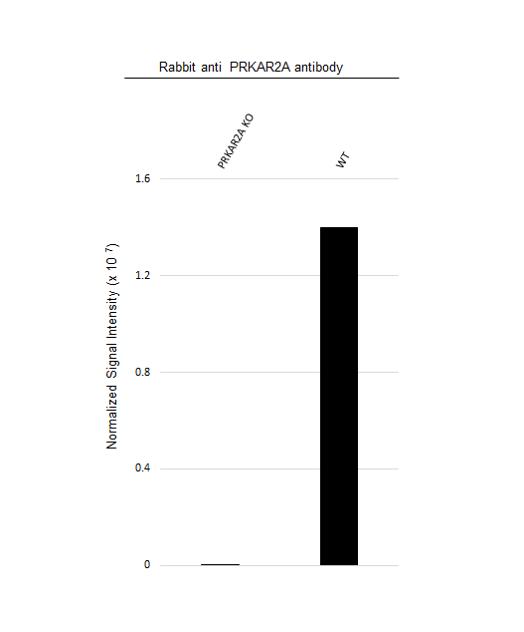 Anti PRKAR2A Antibody (PrecisionAb Polyclonal Antibody) thumbnail image 3