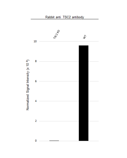 Anti TSC2 Antibody (PrecisionAb Polyclonal Antibody) thumbnail image 3