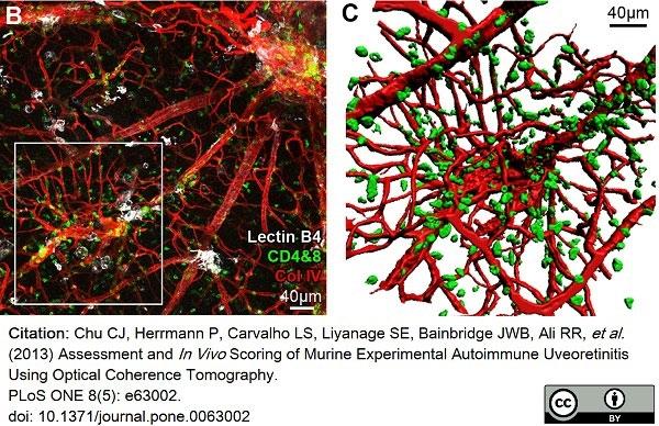 Anti Mouse Collagen IV Antibody thumbnail image 10