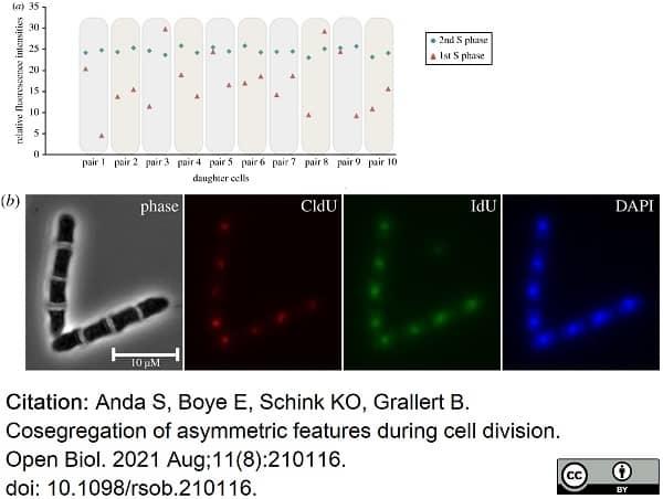Anti Mouse IgG1 Antibody thumbnail image 23