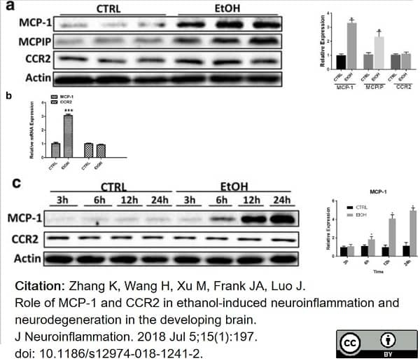 Anti Mouse MCP-1 Antibody thumbnail image 3