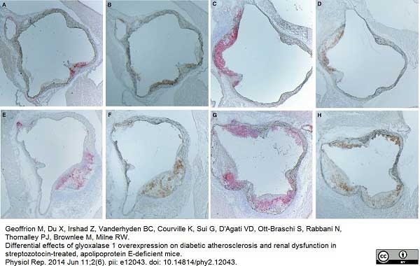 Anti Rat IgG (Mouse Adsorbed) Ab - HRP thumbnail image 3