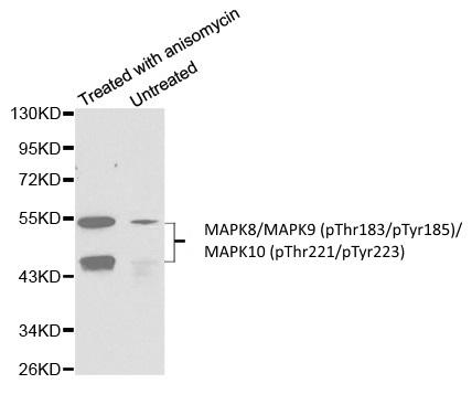 Anti MAPK8/MAPK9 (pThr183/pTyr185)/MAPK10 (pThr221/pTyr223) Antibody gallery image 1