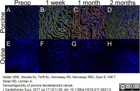 Anti Sheep IgM Antibody gallery image 1