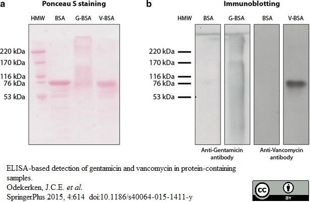 Anti Vancomycin Antibody thumbnail image 1