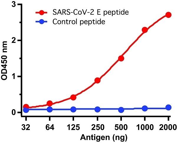Anti SARS-CoV-2 Envelope Antibody gallery image 1