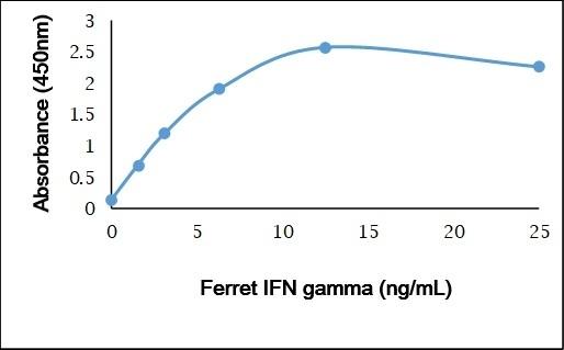 Recombinant Ferret IFN Gamma gallery image 1