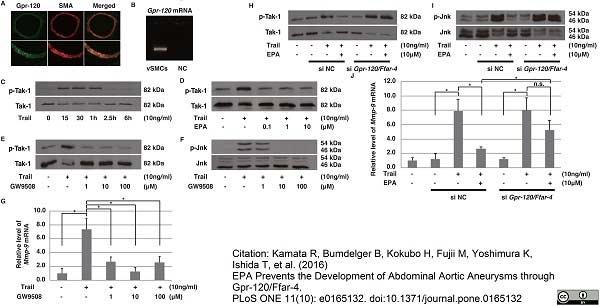Recombinant Human CD253 thumbnail image 5