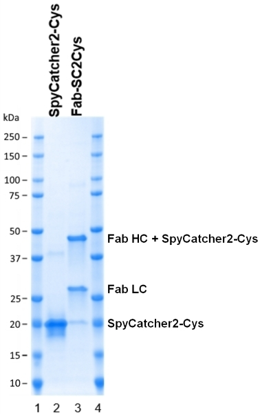 SpyCatcher2 thumbnail image 4